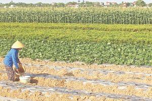 Biến khó khăn thành lợi thế nhờ chuyển đổi cơ cấu cây trồng