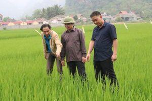 Phát triển nông nghiệp bền vững - nhìn từ người nông dân nghèo