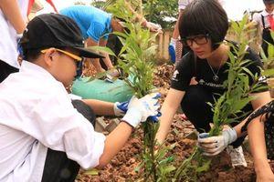 Học sinh Hà Nội trồng các cây thảo dược thay thế mật gấu