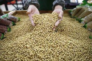 Nga cho Trung Quốc thuê đất cằn cỗi trồng đậu nành
