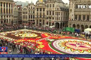 Rực rỡ thảm hoa khổng lồ Brussels giữa nắng hè