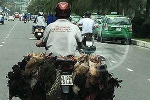 Đà Nẵng: Kiểm tra, xử lý nghiêm tình trạng dùng xe mô tô chở thực phẩm tươi sống không đảm bảo ATGT, vệ sinh môi trường