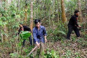 Hương ước và vấn đề bảo vệ rừng