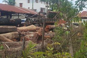 Bắt khẩn cấp hạt trưởng kiểm lâm tiếp tay, nhận tiền trùm gỗ lậu Phượng 'râu'