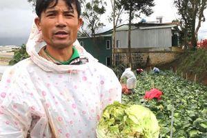 Nông sản Trung Quốc nhái - nỗi đau của nông dân Đà Lạt
