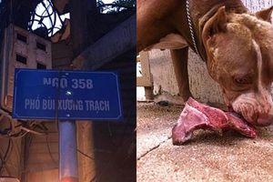 Chó cắn chết anh trai chủ tại Hà Nội: Pitbull là loài chó hung dữ nhất thế giới