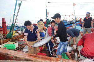 Khó khăn, ngư dân vẫn vươn khơi bám biển