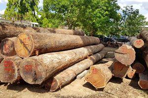Gia đình Chi cục trưởng kiểm lâm Đắk Lắk tự nguyện giao nộp '8m3 gỗ' cho cơ quan điều tra