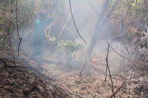 Trên dưới 100 ha rừng trồng của Cty lâm sản Khánh Hòa bị cháy