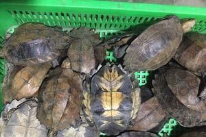 Quảng Nam: Khởi tố 'kiều nữ' Kim Cương buôn bán động vật quý hiếm