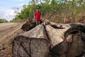 Khởi tố thêm phó hạt trưởng kiểm lâm liên quan vụ án trùm gỗ lậu Phượng 'râu'