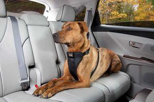 Chở chó mèo trên ôtô, cần lưu ý điều gì?