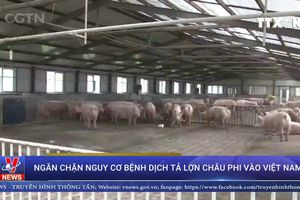 Khuyến cáo người dân cảnh giác cao với dịch bệnh tả lợn Châu Phi