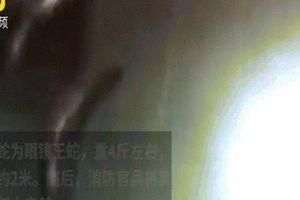 Đứng tim xem cảnh bắt trăn trốn trong ô tô Trung Quốc