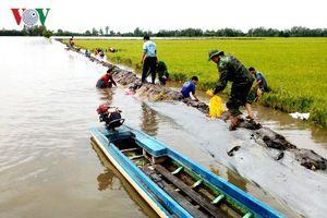 Nông dân An Giang oằn mình cứu lúa