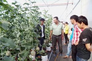 Mô hình mới ở Đắk Nông: Trồng dưa lưới hữu cơ