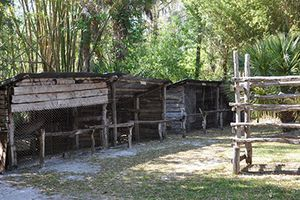 Cái chết bí ẩn của 'Tarzan rừng già Florida'