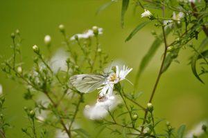 Khám phá hình ảnh động, thực vật hoang dã trong tuần