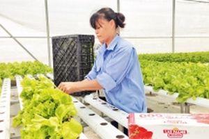 Nông nghiệp công nghệ cao tạo đà cho nông thôn mới