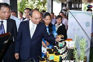 Hình ảnh Thủ tướng dự Hội nghị đầu tư phát triển Sâm Ngọc Linh