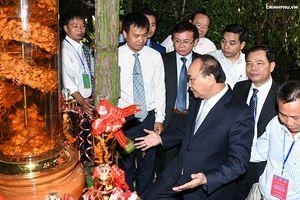 Thủ tướng Nguyễn Xuân Phúc: Cần biến 'quốc bảo' sâm Ngọc Linh thành quốc kế dân sinh