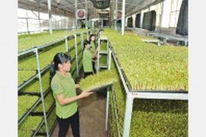 Phát triển nông nghiệp phù hợp quá trình công nghiệp hóa, đô thị hóa (Tiếp theo và hết)(*)