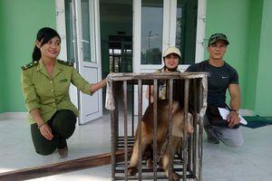 Huế: Cộng đồng mạng gom tiền giải cứu một cá thể khỉ đuôi lợn