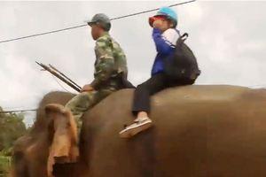 Xôn xao hình ảnh học sinh cưỡi voi đến trường ở Đắk Lắk