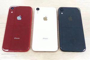 iPhone Xc hứa hẹn có nhiều tùy chọn màu, hỗ trợ hai SIM