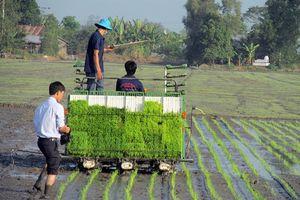 TT-Huế: Sản xuất lúa hữu cơ bằng mạ khay máy cấy