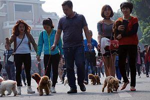E sợ cảnh chó không rọ mõm trên phố đi bộ Hà Nội