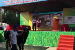 Ngắm những chú bò 'so dáng, đọ sữa' tại Hội chợ triển lãm chăn nuôi