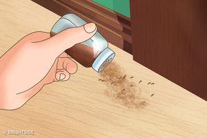 7 cách chắc chắn sẽ đuổi sạch côn trùng khỏi nhà bạn