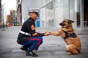 Lạ lùng cách đối xử với chó ở các nước