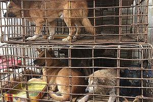 Tổ chức động vật châu Á ủng hộ lời kêu gọi không ăn thịt chó
