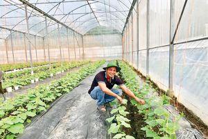 Xây dựng mô hình sản xuất rau theo hướng VietGAP tại Cần Thơ