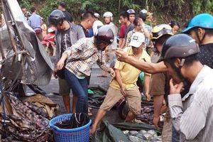 Sự thật cảnh 'hôi của' xe chở cá lật ở Hòa Bình