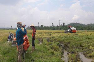 'Cò' bảo kê máy gặt lúa 'hành' nông dân
