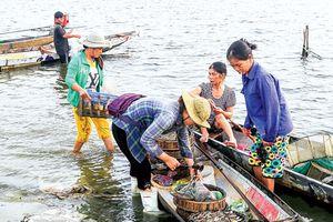 Nhẹ nhàng Chợ nổi trên phá Tam Giang