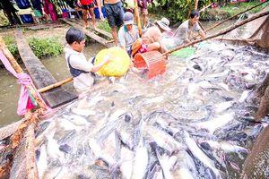 Xuất khẩu cá tra: Vượt 2 tỷ USD nhưng vẫn lo