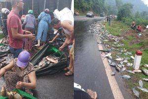 Nhiều người dân Hòa Bình giúp tài xế xe tải gặp nạn gom cá rơi vãi khắp đường rồi mua ủng hộ