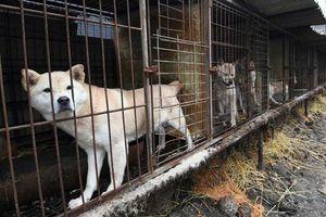 Vào tù bóc lịch nếu ăn thịt chó ở những quốc gia này