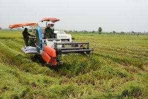 Tăng sức bật từ dồn đổi ruộng đất