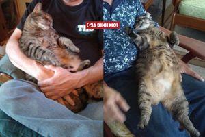 Chú mèo mập ú sáng nào cũng nhõng nhẽo đòi được bế ngủ 30 phút