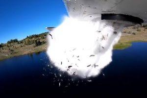 Ấn tượng khung cảnh hàng triệu con cá được thả từ trên không