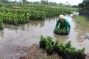 Đà Lạt: Hàng chục ha hoa kiểng bị ngập trong lũ
