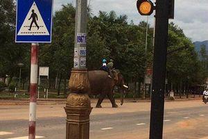 Ông bố cưỡi voi đưa con đi học khiến dân mạng thích thú