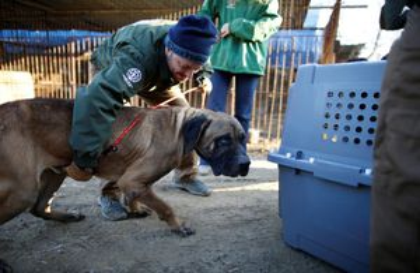 Hạ viện Mỹ kêu gọi Việt Nam chấm dứt buôn bán thịt chó, mèo