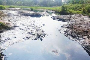 Nước sông Cầu ô nhiễm nặng, dưới sông cá chết, dân trên bờ lao đao
