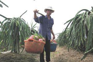 Việt Nam tiếp tục nhập siêu từ Nhật Bản